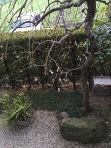 ぽつぽつ咲いています